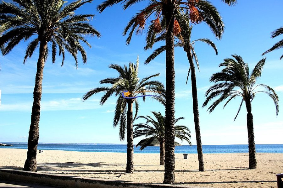 Palms at the beach of Magaluf